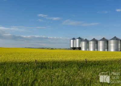 Canola and granaries (1 of 1)